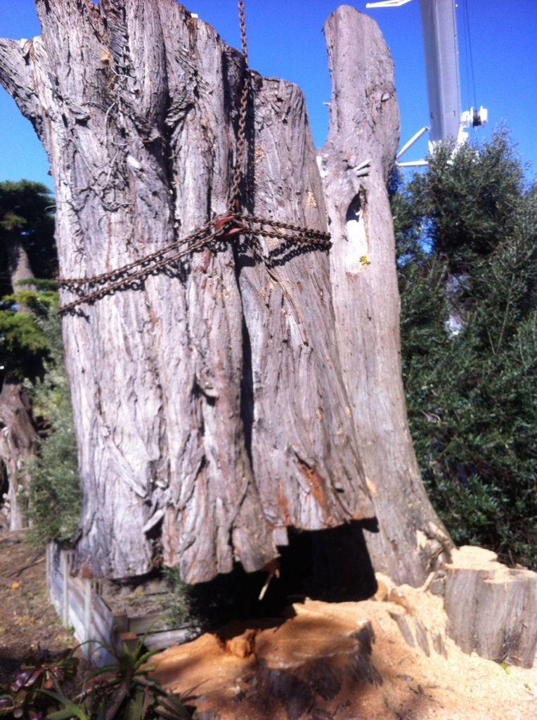 Tree-rrific Tree Service