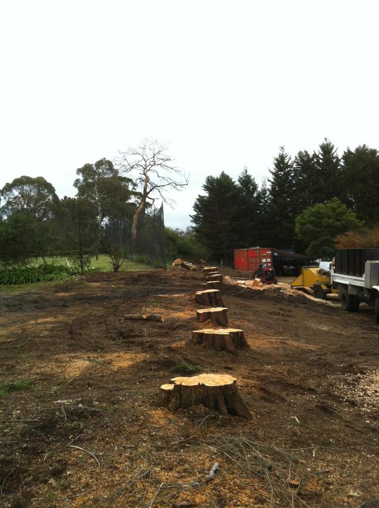 rosebud tree and stump removal